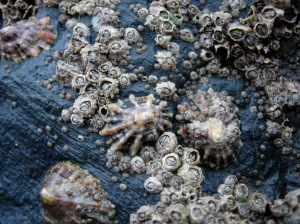 They talk about reincarting as barnacles. I'd probably freak out too if I knew that was a possibility.