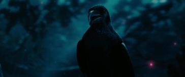 maleficent-diaval-raven